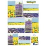 """A4 paber """"Lavendel"""" IT577"""
